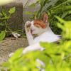 花壇にいる外猫