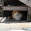 町中に暮らしている外猫台の下に隠れる