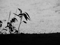 野草の息吹