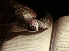 おうちdeフォト「亀も読書」