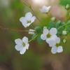 春を探して2021「春の雪」