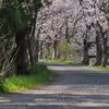 玉川の里2021「桜道」