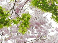 神峯山寺2021春「春から夏へ ~季節のリレー~」