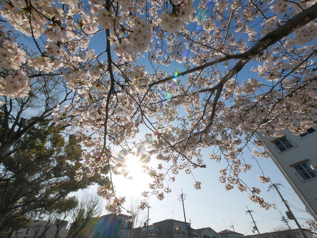 玉川の里2021「春の光」