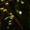 神峯山寺2021春「生まれたての緑」