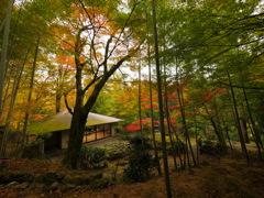 神峯山寺 真珠院の秋