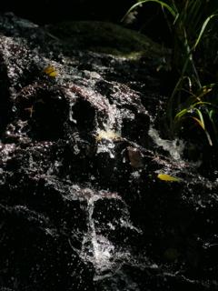 水無瀬の滝2