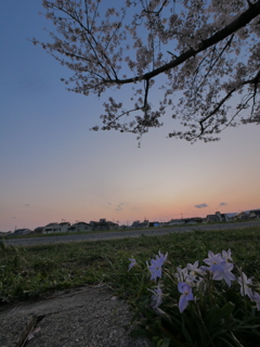 夕焼けと花