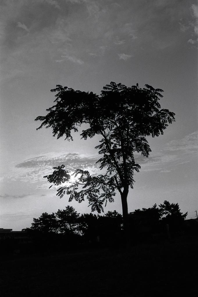 回想録(College Days)034「一本の木」