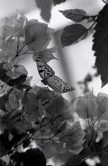 回想録(College Days)015「蝶の横顔」