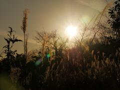 冬の夕景~摂津峡公園2020~