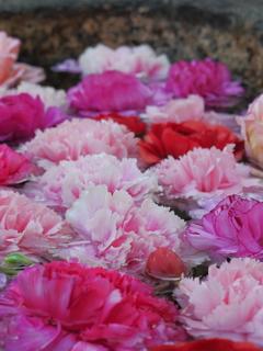 野見神社の花手水2