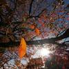 秋のひとひら