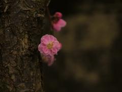 ひっそり、静かに咲く
