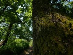 古墳の上の大木