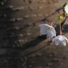 玉川の里2021「そっと咲く」