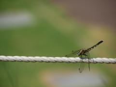 綱渡り……あっ、飛べるんだった