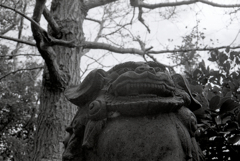 回想録(College Days)079「志賀島の狛犬」