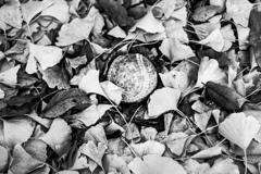 たまたま見つけた球