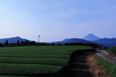 1.5.4 茶畑と薩摩富士