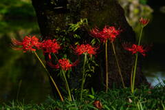森に咲く紅