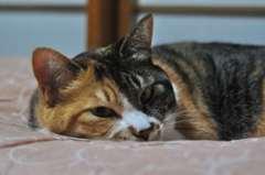 わが家のわがまま猫