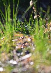 雑草の世界
