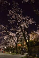 冨士森公園の夜桜