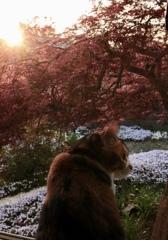 庭を眺める
