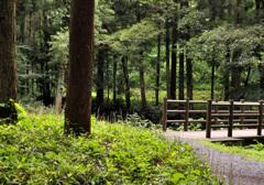 森の途中で休憩