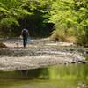 新緑の渓流と釣り人