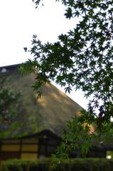 広徳寺の秋