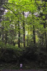 八王子城跡の森