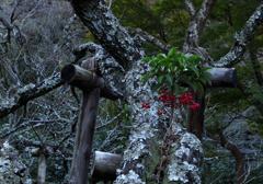 瑞泉寺の梅の木