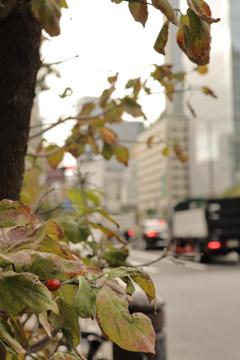 大都会の虫の食事 穴ぼこだらけの葉っぱ発見