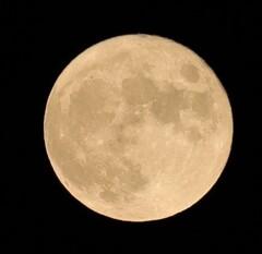 中秋の名月&満月だそうな