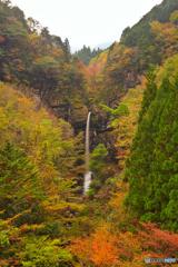色づく大瀧の滝