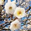line_1580011847320春の香り