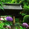 DSC_0760紫陽花寺