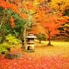 DSC_8335紅葉庭園
