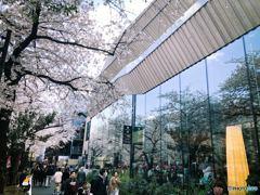 中目黒のスターバックスリザーブと桜