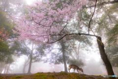 朝靄の奈良公園
