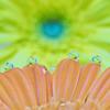 花としずくフォト2