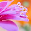 花としずくフォト