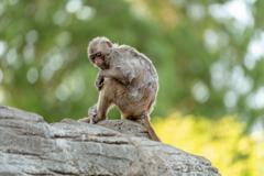 一人ぼっちの猿