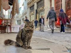 イスタンブール 猫
