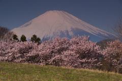 篠窪の春②