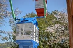 桜の観覧車。