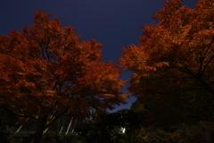 紅葉と満月の灯り。②