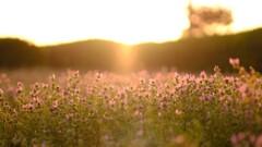 sunset hotokenoza